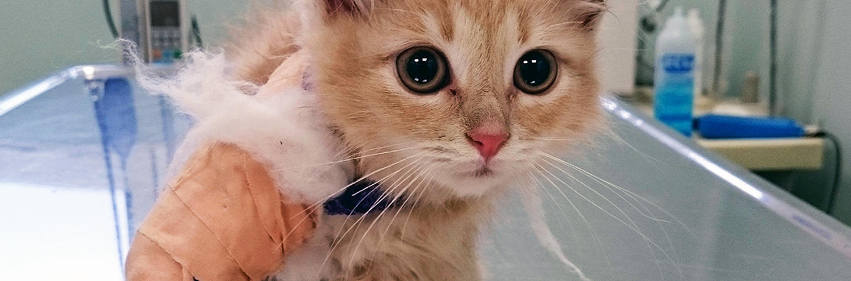 VIER PFOTEN, kleine Katze, verletzt, OP-Tisch, große Augen