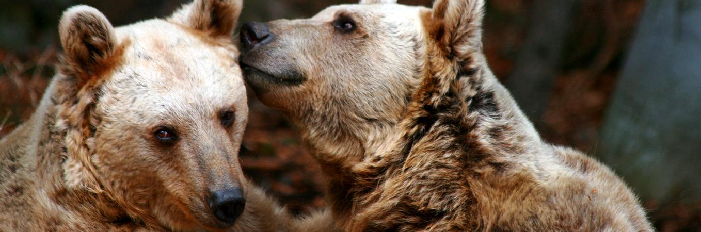 zwei Bären VIER PFOTEN