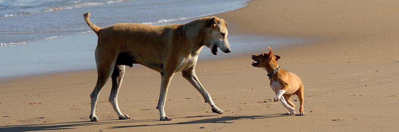 zwei Hunde VIER PFOTEN