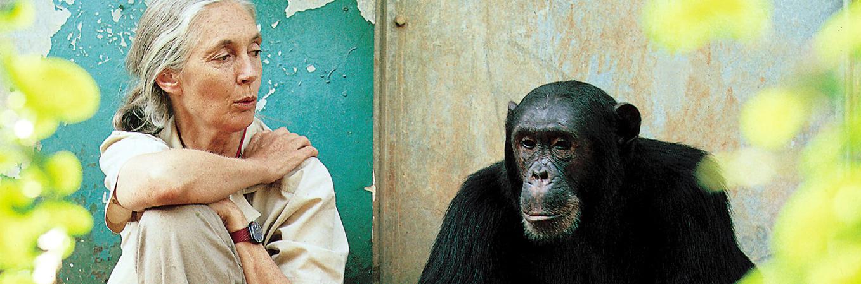 Jane Goodall Institut-Austria: Helfen Sie uns helfen!