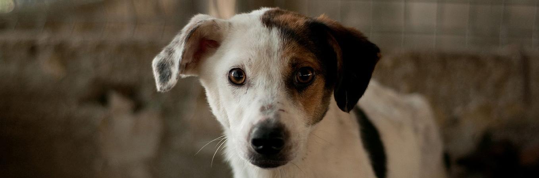 Hilfe für leidgeplagte Hunde