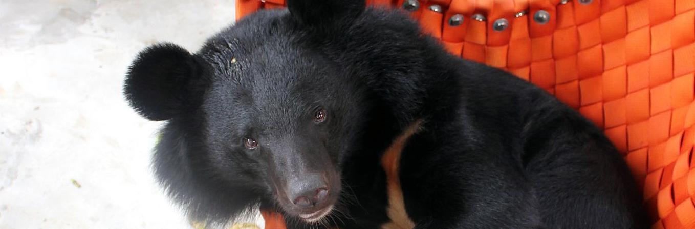 VIER PFOTEN Bärenpatenschaft