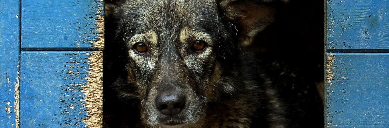 VPF Streunerhunde-Patenschaft
